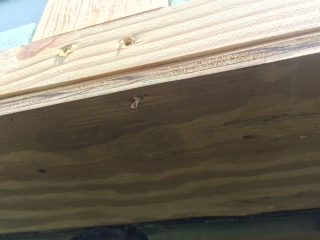 sheathing nailed underneath pressure treated